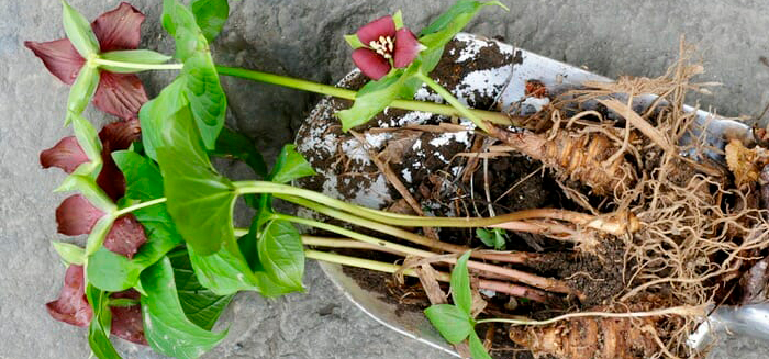 Feel Uprooted? 3 Truths to Ground You
